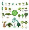 25 Diversity of trees set vector image