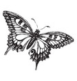 butterfly vintage vector image vector image