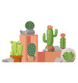 cactus houseplant collection vector image