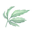 watercolor green leaf plant deocration on white vector image vector image