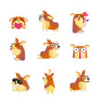 corgi dog cartoon character icons collection vector image vector image