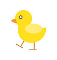 cute chicken or duck walking vector image