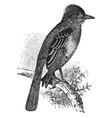 great crested flycatcher vintage vector image vector image