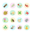 set of spice vector image vector image