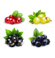 berry clusters realistic set vector image vector image