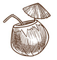 coconut tropical cocktail with straw and umbrella vector image