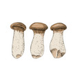hand drawn king oyster mushrooms vector image vector image