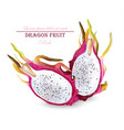 dragon fruit isolated realistic summer vector image vector image