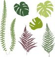 Fern and monstera silhouettes Isolated on white vector image vector image