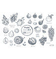 fruits hand drawn sketch icons set organic food vector image vector image