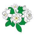 bouquet gardenia jasminoides cape jasmine vector image vector image