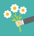 businessman hand holding bouquet of white daisy vector image vector image