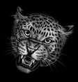 growling leopard vector image vector image