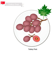 Ripe Grape A Popular Fruit in Turkey vector image vector image