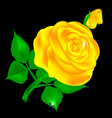 dark and yellow rose vector image vector image