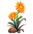 orange flowers with leaves on white background vector image vector image