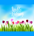 blue sky tulip spring banner vector image vector image