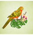 Sun conure parrot tropical exotic bird vector image