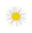 Camomile flower isolated on white background vector image vector image