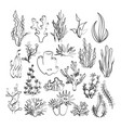outline seaweeds vector image