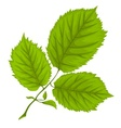 Branch with green leaves on vector image vector image