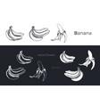 hand drawn bananas fruits sketch set vector image vector image
