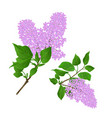 lilac twigs with flowers and leaves vintage vector image