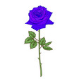 beautiful blue flower rose isolated on white vector image