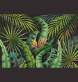 palm leaves background tropical summer jungle vector image
