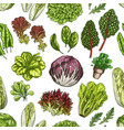 salad leaves and herbs seamless pattern background vector image vector image