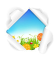 Torn Paper With Flowers Grass And Color Eggs vector image
