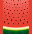 watermelon texture background with seeds vector image vector image