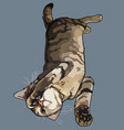 cartoon striped gray cat lying down playing vector image vector image