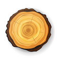 cross section tree wooden stump tree round vector image