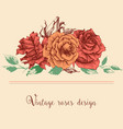 pink roses bunch flowers in linear arrangement vector image