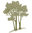 Woodcut Trees vector image vector image