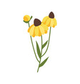 yellow gerbera with green stable and foliage icon vector image vector image