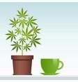cannabis herbal tea and marijuana plant vector image vector image