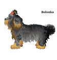 colored decorative standing portrait of bolonka vector image vector image