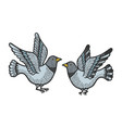 dove pigeon birds tattoo color sketch engraving vector image vector image