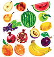 fruit color on white background vector image vector image