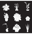 silhouette icons houseplants indoor and office vector image