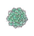 succulents Flower graptopetalum vector image vector image