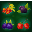 berry icon set on green background vector image vector image
