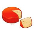 gouda cheese hand drawn vector image vector image