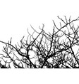branch of tree silhouette on white background vector image vector image