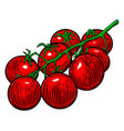 cherry tomatoes isolated on white design element vector image vector image