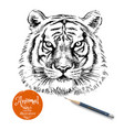 hand drawn tiger head sketch isolated tiger vector image