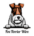 head fox terrier wire - dog breed color image vector image vector image