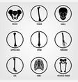 human bones icons vector image vector image